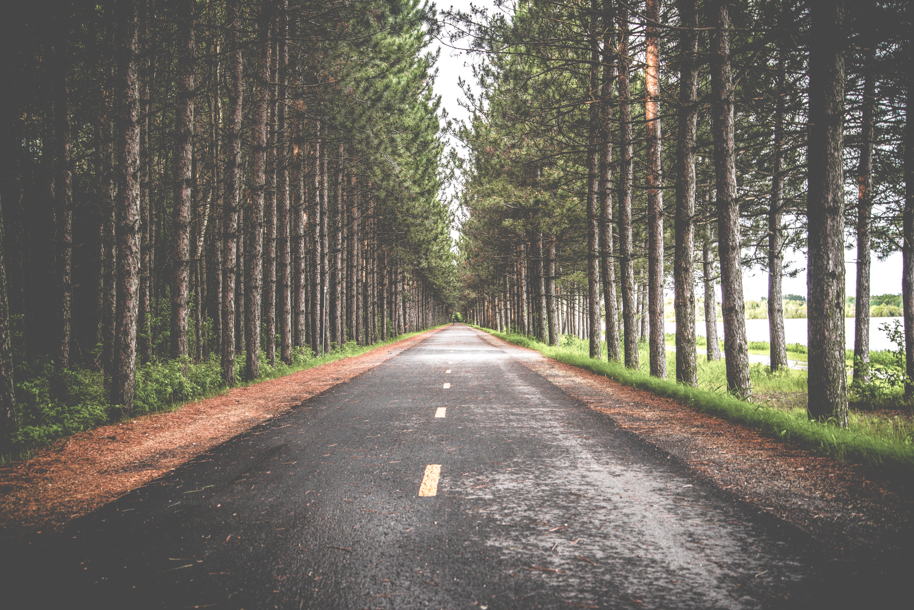 El corazón del bosque